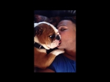 Adorable Bulldog Puppy Cant Stop Kissing Owner