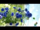 «Дачный сезон 2015» под музыку Любимой мамочке от сына Ильй и от дочки Яночки - Поздравление маме с днем рождения!я тебя очен
