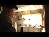 Николаевские голуби  Черновцы