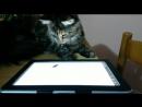 Джойа играет в игру на планшете.