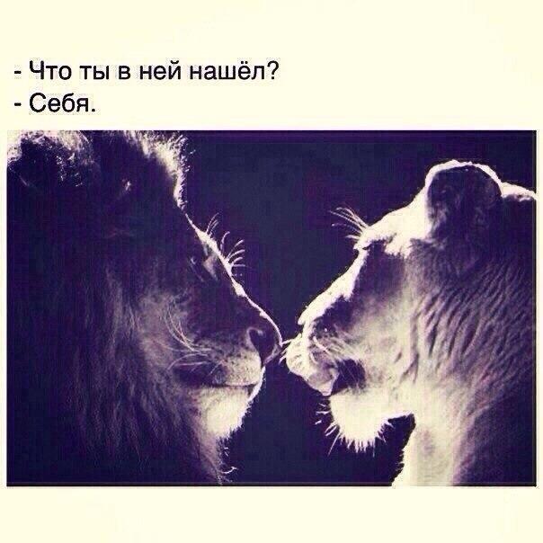 Моя любимая, картинки лев и львица с надписями про любовь