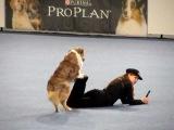 Freestyle Dog Dancing - Vanda Gregorova &amp All That Brandy Gentle Mate