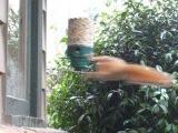 twirl a squirrel champ