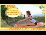 Растяжка для начинающих / Расслабление, развитие гибкости и избавление от болей ...