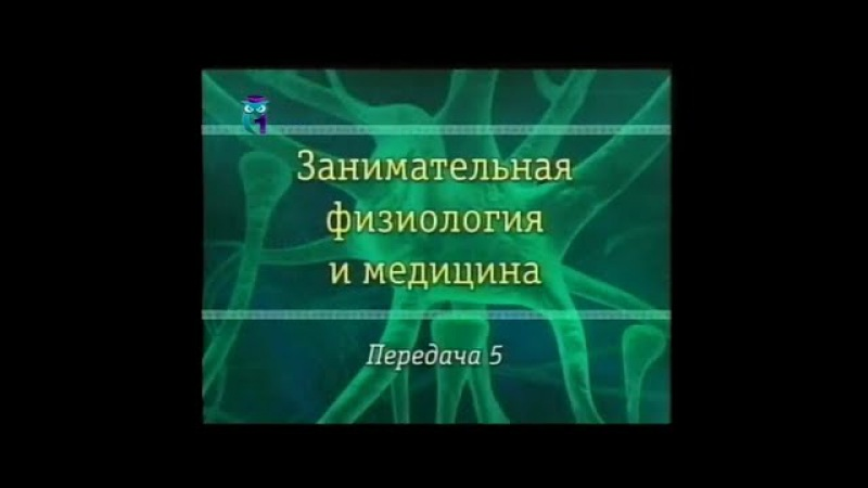 Передача 5. Эндокринная система. Влияние гормонов на организм человека