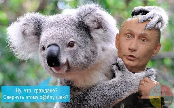 Из плена террористов освобождены 17 украинских бойцов, - Порошенко - Цензор.НЕТ 5446