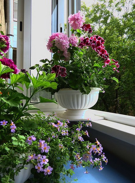 Цветы на балконе: какие сажать и правила ухода