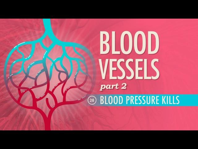 Кровеносные сосуды - Кровяное давление (Часть 2-я) [Рус.суб.]