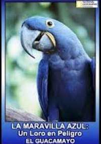 La maravilla azul: Un loro en peligro 2007