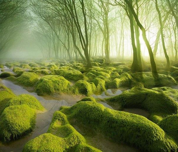 Мховое болото, Румыния