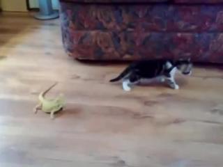 Котенок и ящерицы _ Cat and Lizard