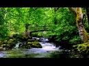 1 Hour Nature Sounds-Relax-Birds Singing-Vogelgesang-le chant des oiseaux-Bird Song