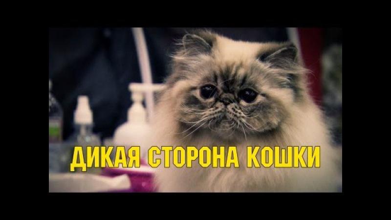 Дикая сторона кошки - HD качество