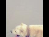 прогулка со своей собакой(Порода среднеазиатская овчарка, также известной как алабай и туркменский волкодав)