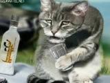 Смешное поздравление с Днем рождения мужчине от блатных котов
