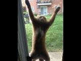 Видео приколы про кошек! До слез! Подборка №1!