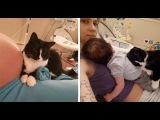 Кошка полюбила малыша еще до рождения и превратилась в отличную няньку (cat loves the c...