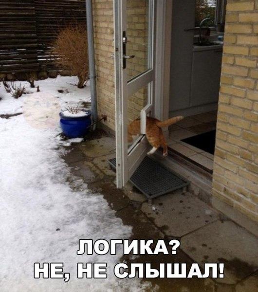 #приколы #юмор #смех #анекдоты