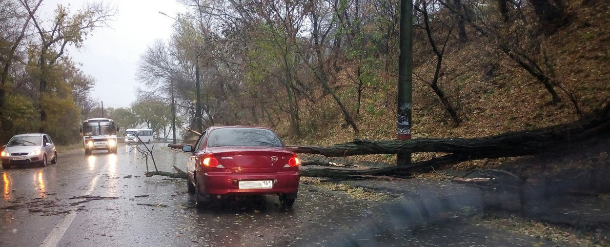В Таганроге на Комсомольском спуске на автомобиль Kia упало дерево