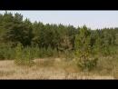 Лесные экспедиции Челябинская область Карталинское и Брединское лесничество