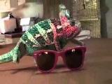 Хамелеон и разноцветные очки