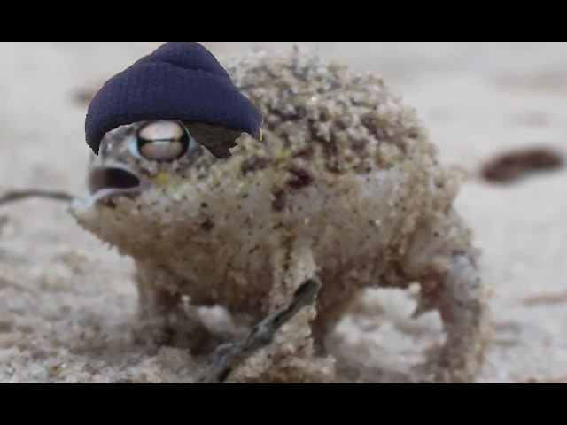 The SouthAfrican Coughing rain Frog - - - H3H3 ethan fan edit