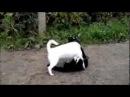 бои собак и кошек