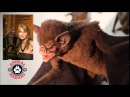 Animated Vampire Bat Puppet by Animal Makers