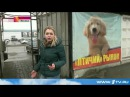 В Липецкой области 15 летняя девочка умерла, заразившись бешенством после укуса щенка