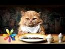 Что нужно есть вашей кошке? - Все буде добре - Выпуск 565 - Все будет хорошо 16.03.2015