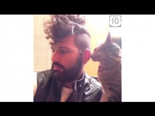 Классные приколы с котами. Супер смешные коты. Видео приколы про котов. Улетные животные
