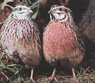 способ утилизации падежа птиц