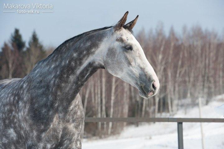 RE: А где в Оренбурге можно покататься на лошадях