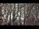 Rory Gallagher A Million Miles Away Irish Tour 74 HD