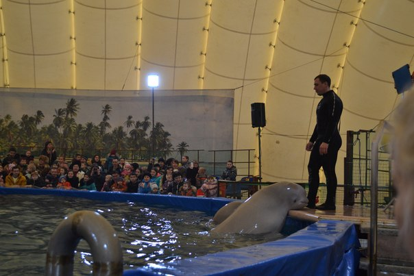 RE: Кто-нибудь ходил в дельфинарий в Армаде?