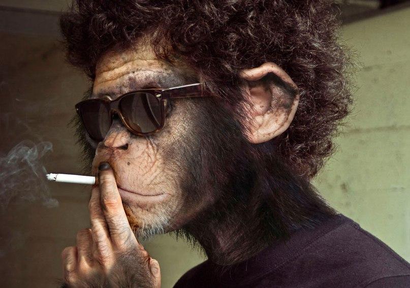 Именами мальчиков, смешные картинки обезьянок в очках