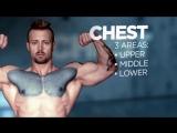 Анатомия мышц и упражнения для набора мышечной массы