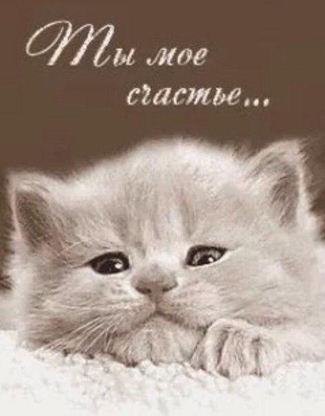 картинки котят ты самый добрый
