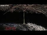 Life - The Vogelkop Bowerbird Nature's Great Seducer  - BBC One