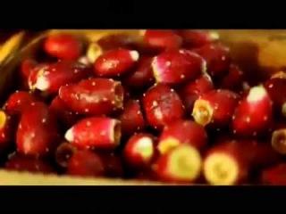 """Пища богов.  """"Фрукты, свежевыжатые соки, компоты и кисели.  Яблоки, кактусы, ягоды и тд."""""""