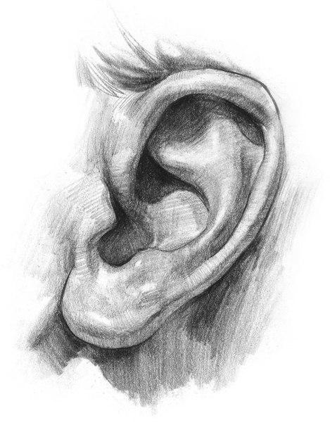 рисунок уха: