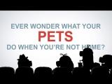 Миньоны смотрят трейлер мультика «Тайная жизнь домашних животных»