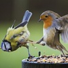 Angry birdwatchers