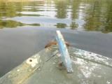 Лодка Южанка(казанка с булями)Двигатель вихрь 25.