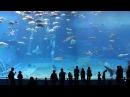 Океанариум «Окинава Тюрауми»