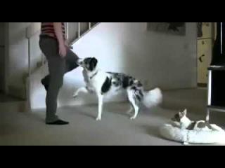 Собака тренировки Бадди Смешное видео