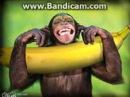 Я тебя никому не отдам потому что ты банан!