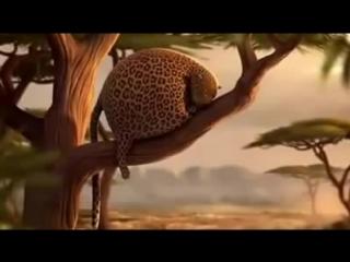 Толстые животные Мультфильмы приколы 2015 Забавные откормленные животные мультик про