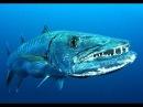 Самые опасные животные Морские глубины Документальные фильмы Nat Geo Wild HD