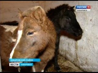 Защитники животных проверили любителя дикой природы. Вести-Хабаровск. 28.11.2014